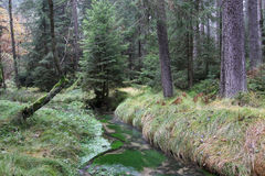 Stream in autumn forest Royalty Free Stock Image