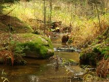 Stream in autumn forest. Czech Republic Royalty Free Stock Image