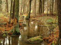 Stream in autumn forest. Czech Republic Royalty Free Stock Photo