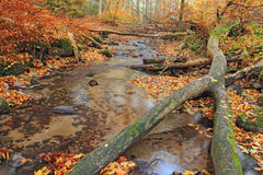 Stream in autumn forest Stock Images