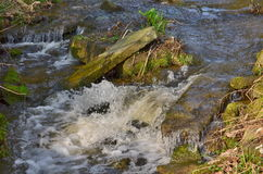 Stream in autumn forest. South Bohemia, Czech Republic Royalty Free Stock Images