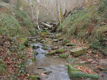 Stream in autumn forest, water flowing among stones. Creek in forest valley, slopes overgrown with grass Royalty Free Stock Images