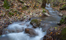 Stream. In the autumn forest, Zadiel, Slovakia Stock Image