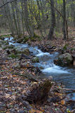 Stream. In the autumn forest, Zadiel, Slovakia Royalty Free Stock Photos