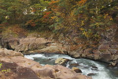Stream and Autumn leaf color Stock Images