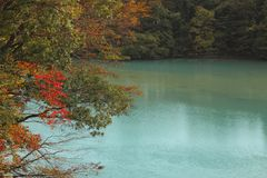 Stream and Autumn leaf color Stock Photos