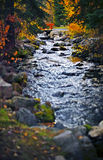 Stream and autumn leaves. Front view of moving stream of water in the middle of lush autumn forest stock photo