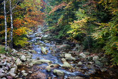 Stream in Autumn Mountain Forest Stock Image