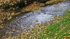 Stream in an autumn park stock footage