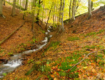 Stream through the autumn trees Royalty Free Stock Photos