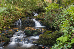 A Stream in Autumn Royalty Free Stock Photography