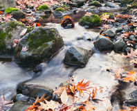 Stream in Autumn Woods. Autumn creek woods with yellow and red leaves foliage and rocks Royalty Free Stock Photography