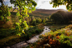 Stream and backlit leaves at dovestone Royalty Free Stock Photo