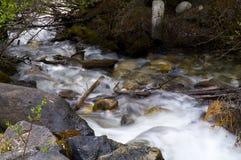 Stream in Banff National Park. Creek near Morant's Curve in Banff National Park, Alberta, Canada Stock Photo