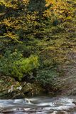Stream and bank in fall colors, rhododendron and autumn leaves. Vertical aspect royalty free stock photo