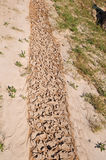 Stream bed drying in the sun Royalty Free Stock Photos