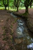 Stream between beech forest. A a little river runs besides some beech trees in a forest at the Basque country, Spain. Sensation of solitude or calm stock photos