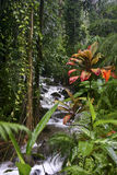 Stream on the Big Island of Hawaii Stock Photo