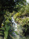 Stream in a Biome. The Eden Project Royalty Free Stock Photography