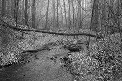 Stream in Black and White royalty free stock photos