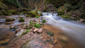 Stream in Blackforest Royalty Free Stock Photo