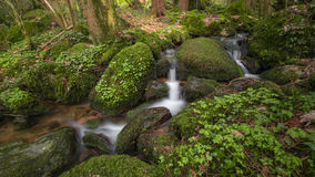 Stream in Blackforest Royalty Free Stock Image