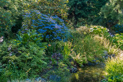 Stream With Blue Flowers  Stock Photo