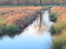 Stream and bracken. A photo of a slow moving river surrounded by hedges of grass and bracken Royalty Free Stock Photo