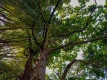 Stream. Branching pattern tree Sierra bosque royalty free stock photo