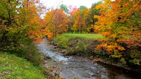 Stream Burbles Through Vibrant Trees During Fall Colors in Vermont