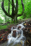 Stream with cascade in spring Stock Photography