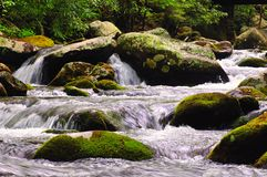 Stream cascades over rocks. White water mountain stream with rocks, moss, leaves, and trees stock photography