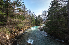 Stream in the centre with forest in sides at Kamikochi.  Stock Images