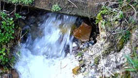 The stream with clear water gurgling in a forest clearing. Sunny spring day. There were first yellow flowers and green grass stock video footage
