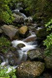 Stream close. Image of calm stream running through a forest stock photo