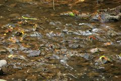 Stream. A close up of a slow moving stream with blurry waters in North Carolina, USA Royalty Free Stock Photos