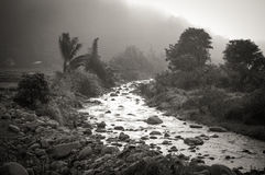 A stream coming through the mist. A mountain stream emerges from fog and mist royalty free stock images