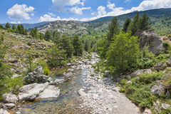 Stream in Corsica France Royalty Free Stock Photography