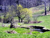 Stream in countryside Stock Images