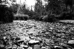 Stream in the countryside Stock Image