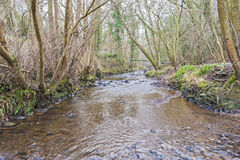 Stream through countryside rural woodland in winter Stock Image
