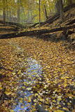 Stream covered with leaves in autumn. Royalty Free Stock Photos