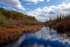 Stream Through Cranberry Bog. With thick brush and clouds reflected in water in Tannersville, Pennsylvania Stock Photography