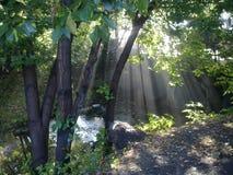 Stream creek sun trees summer Royalty Free Stock Image