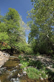 Stream Creek Stock Image
