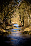 Stream crosses through the fores Royalty Free Stock Image