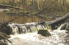 Stream dam in early spring Royalty Free Stock Images