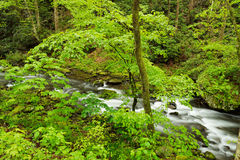 Stream in deep forest. Royalty Free Stock Photography