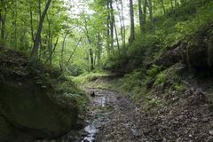 Stream in dense forest Stock Images