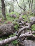 Stream in a dense forest. Taken in Norway Stock Photos